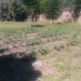 L'orto sociale delle cooperative ad Avella è stato smantellato. Nessuna concessione, nessun atto ufficiale di affido all'associazione, che volontariamente aveva deciso di dar vita ad un progetto sociale che aveva...