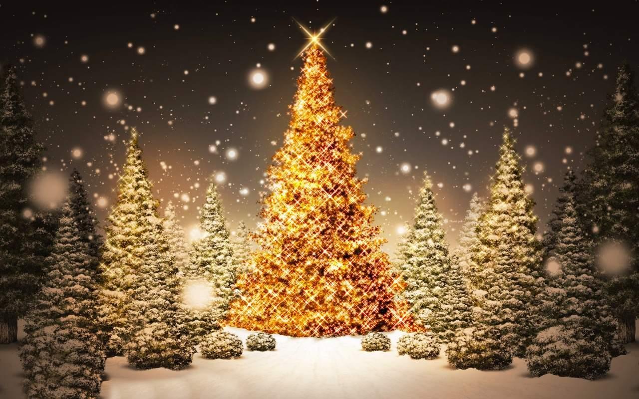 Albero Di Natale 8 Dicembre.Sirignano Accensione Dell Albero Di Natale Giovedi 8 Dicembre Alle